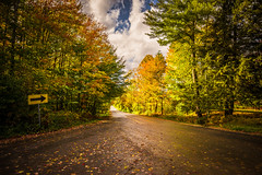 This Way for Autumn Goodness (Nicholas Erwin) Tags: road autumn fall foliage sign nature leaves leaf travel naturephotography path sunny sun nikon d610 2018g nikkor vermont vt unitedstatesofamerica usa america morristown morrisville fav10 fav25 fav50
