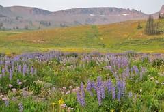 Teton Crest Trail, Grand Teton National Park (wldrns) Tags: tetoncresttrail grandtetonnationalpark backpacking grandteton wyoming alaskabasin alaskabasinshelf