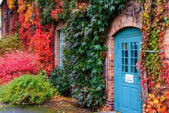 Autumn wall (Cajofavi) Tags: fs171015 hostfoto fotosondag kalmar sweden autumn building leaf fall