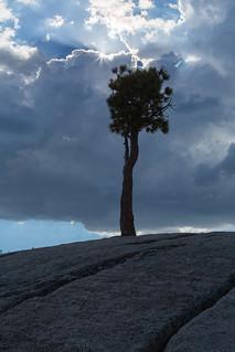 Yosemite ... Tall on the Rocks