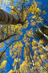 October 1, 2017 - Fall foliage in Rocky Mountian National Park. (Tony's Takes)
