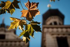 Herbst.... (Phil Bandow) Tags: schweriner schloss impressionen blätter herbst autumn