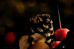 fragments of autumn (sure2talk) Tags: macromondays sidelit fragmentsofautumn autumnal autumn fragments debris berries pinecone acorn leaf shallowdof macro hmm lensbaby lensbabycomposerpro sweet50optic macroconverter 8mm lensbabylove