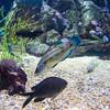 Valencia - Oceanografic (Chantal_D84) Tags: g9xmk2 chantal citytrip spanje valencia oceanografic fish