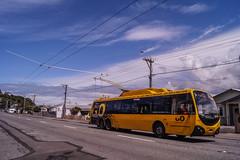 Miramar - Rotherham Terrace (andrewsurgenor) Tags: transit transport publictransport nzbus gowellington electric trackless trolleybus trolleybuses wellington nz streetscenes bus buses omnibus yellow obus busse citytransport city urban newzealand