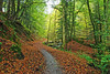 Birnam Glen (eric robb niven) Tags: ericrobbniven scotland birnam glen perthshire landscape dunkeld trees cycling