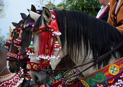 Black mane in colorful spirit (Raquel Borrrero) Tags: grazalema cádiz caballo horse fiesta bandolero crines mane manehorse andalucia españa caballos sierra black outdoor celebration animal mammal mamífero