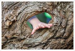 Attraverso la natura (Outlaw Pete 65) Tags: albero tree legno wood buco hole mano hand dita fingers natura nature colori colours riservanaturaledelsebino nikond600 tamron70200mm provagliodiseo lombardia italia
