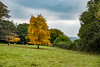 20171015-IMGP0896 (rob mulf) Tags: nymans landscapes pentax westsussex greatbritian england outdoors nature