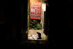 Cat, Alone in the Dark (superzookeeper) Tags: 5dmk4 5dmkiv canoneos5dmarkiv ef2470mmf28liiusm eos digital taiwan tw formosa jiufen cat alley backstreet backalley catsofflickr catsoftaiwan catsofjiufen silhouette night free freedom street
