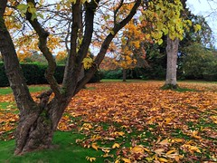 Autumn Leaves (Marc Sayce) Tags: colours fall leaves lodge autumn october 2017 alice holt forest hampshire wrecclesham farnham surrey south downs national park