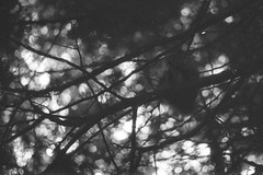 fortepan-100-8 (Vasily Ledovsky) Tags: 35mm expired film forte bw fortepan 100 blackwhite voigtlander canon bessat ltm 50mm 18 monochrome