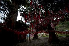 0333 (Shota Fukuda) Tags: 日本 japan 岩手県 遠野 神社 shintoshrine 卯子酉神社 卯子酉様