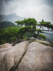 Korean Pine Trees (Andris Nikolajevs) Tags: bukhansan nationalpark southkorea korea seoul trees pines pinetree mountains walking hillwalking outdoors nature clouds sky daytime hiking trekking rock crack leadinglines peaks