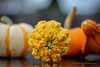 DOF (K.Yemenjian Photography) Tags: georgia unitedstates 50mm apertureprioritymode aperturepriority focus details detailed closeup macro canon700d canont5i canon halloween colors color orangecolor colorful colour pumpkin squash