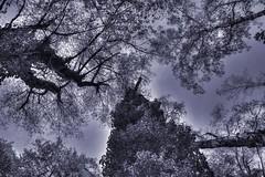 Onward and Upward (mmalinov116) Tags: up upward onward view forward tree bw monochrome