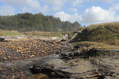 Return to the trailhead (rozoneill) Tags: merchants sacchi agate beach fivemile point twomile creek seven devils state recreation area wayside day use oregon hiking bandon cape arago coast trail