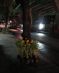remembering the king on the sidewalk (the foreign photographer - ฝรั่งถ่) Tags: yellow flowers tied tree phahoyolthin road bangkhen bangkok thailand canon