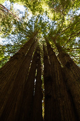 Hwy 101 CA-OR July 2018-8 (ntisocl) Tags: 2017 california californiacoast canon1dmarkiii hwy101 pacificnorthwest redwoodhwy treesofmystery redwoods roadtrip roadsideattraction trees