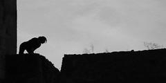 Silhouette (Pi-F) Tags: silhouette femme cheveux mèche nb noiretblanc noir blanc monochrome ombre rempart contrefort périgord château commarque féline félin