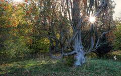 Herbst_Autumn (Ruinenvogel) Tags: hdr herbst herbstzauber autumn laub baum sun sonne