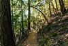 Mount Saint Helena Trail in Napa County (harminder dhesi photography) Tags: lightroom vscocam vsco wideangle tokina 70d canon northbay bayarea norcal california cali calistoga napa trees trail nature summer outdoors park view hiking landscape