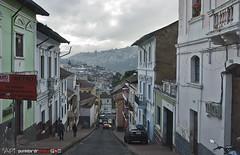 Quito Old Town (punkbirdr) Tags: api audy birds birding d7100 nikkor24mmf28af ecuador punkbirdrphoto