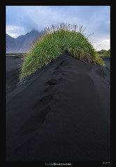 Iceland Chia Pet (Ilan Shacham) Tags: landscape abstract minimalism spine grass head chiapet black sand green fineart fineartphotography iceland stokksnes beach vestrahorn