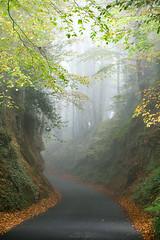 Yamazon (Sarah_Brooks) Tags: rainforest somerset hollow autumn trees lane beech gree orange fall landscape treescape fog mist