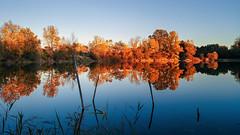 Autumnn... (.: mike | MKvip Beauty :.) Tags: lgg6 lgh870 lg rearcamera1 71° wideangle manualexposure manual handheld availablelight naturallight backlight backlighting sunset sunsetlight dof nature blue water lake reflections autumn fall berg germany europe mth mkvip ngc npc