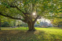 Rengerspark in Leeuwarden op 04-11-2017