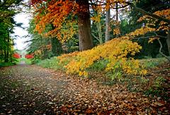 IMG_0601 (bob_rmg) Tags: perrow arboretum tree autumn colour leaves bedale thorp maple wood