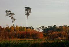 DSC_1854 (FMAG) Tags: 2017 żabieniec zalesie jesien
