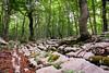 Sottobosco carsico (SDB79) Tags: sottobosco bosco trekking parconazionaleabruzzo sentiero carsismo pietre alberi
