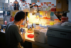 Focus (transduction) Tags: laboratory biology experiment film analog chinon ce4