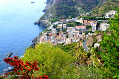 Panorama sulle Cinque Terre La Spezia Riomaggiore. (oscar.martini_51) Tags: mare natura fiori paesaggio cielo