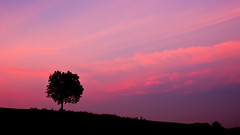 New day, new hope. (VB31Photo) Tags: vb31photo nature tree lone lonely lonelyness morning sunrise dawn landscape clouds cloud nuages nuage paysage backlight backlit contrejour lauragais hautegaronne france occitanie midipyrénées sicoval europe silhouette