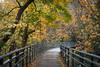 Autumn in Reed College (RaminN) Tags: reed college portland oregon canyonbridge autumn fall