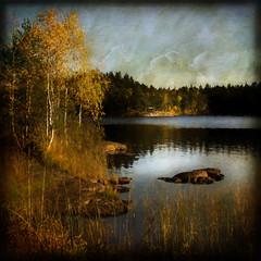 Last week of October. (BirgittaSjostedt) Tags: landscape nature scene lake autumn birch stone texture paint birgittasjostedt