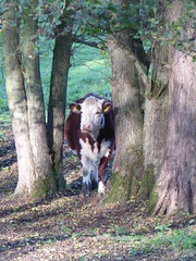 looking at you (lesleydugmore) Tags: grass green kinver uk europe britain staffordshire outside outdoor branches leaves