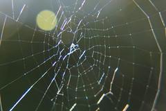 IMG_0377 (ultomatt) Tags: spectacular spider spiders spiderweb spiderwebs beauty beautiful nature natural chromatic rainbow rainbows naturalbeauty