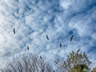 IMG_6625 flying storks