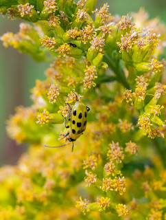 Bugs. Tiny and tinier,