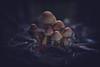 Creature d'autunno nel bosco (C-Smooth) Tags: mushrooms autumn woods funghi autunno bosco nature macro sottobosco