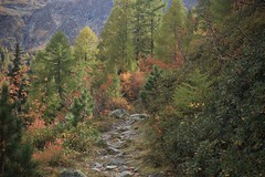 vallon d'Arby (bulbocode909) Tags: valais suisse vallondarby latzoumaz montagnes nature forêts arbres automne vert rouge jaune sentiers