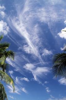 Ballet nuageux entre 2 cocotiers à Tahiti