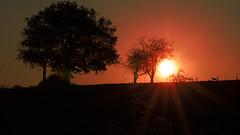 Sunscape (Renate Bomm) Tags: 2017 365 7dwf canoneos6d ef100mmf28lusm flickrunitedaward projekt365 renatebomm ruh ao sunscape