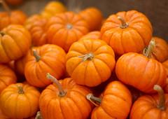 Minis (~DGH~) Tags: 2017 alberta canada fallfestival october prairiegardens autumn fall jackolanterns pumpkins smcpentaxda50mm