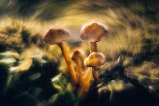 psychedelic Pic, Magic Mushroom 2
