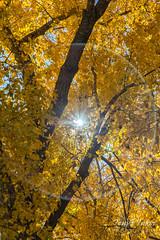 Starburst through the fall foliage